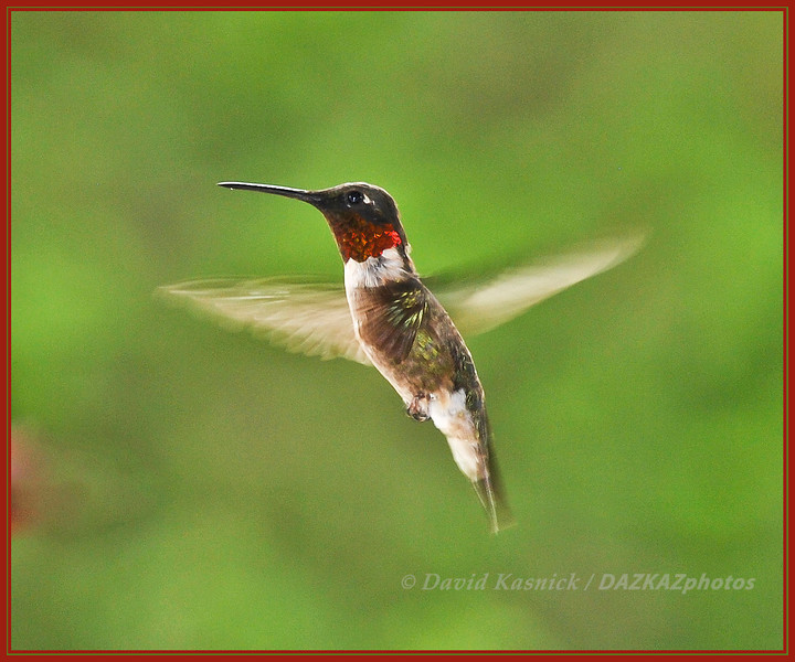 Hummingbird 1 - Carbondale, IL