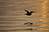 Pelican Silhouette - Biloxi, MS