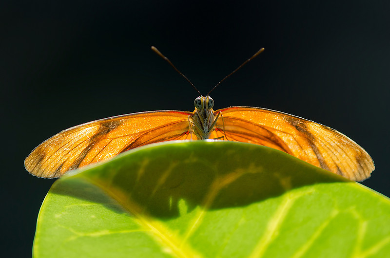 Butterfly Gardens, Victoria, British Columbia<br /> Camera: Pentax K-5 / Lens: A*200/4 macro