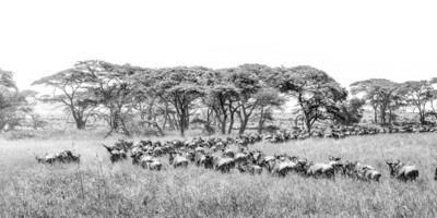 Great Migration III