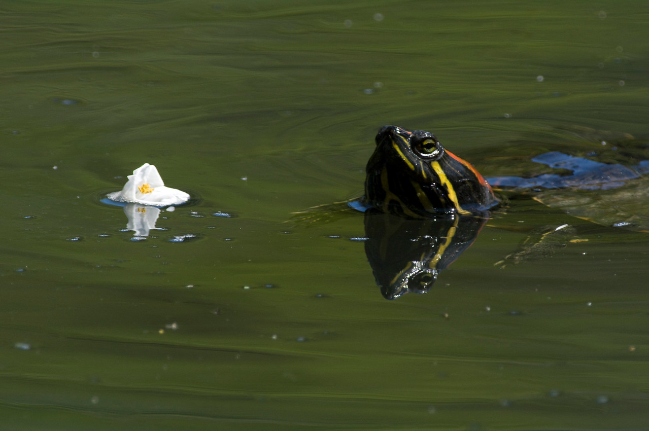 Beacon Hill Park, Victoria, British Columbia, Canada<br /> Camera: Pentax K-7 / Lens: A*1200/8
