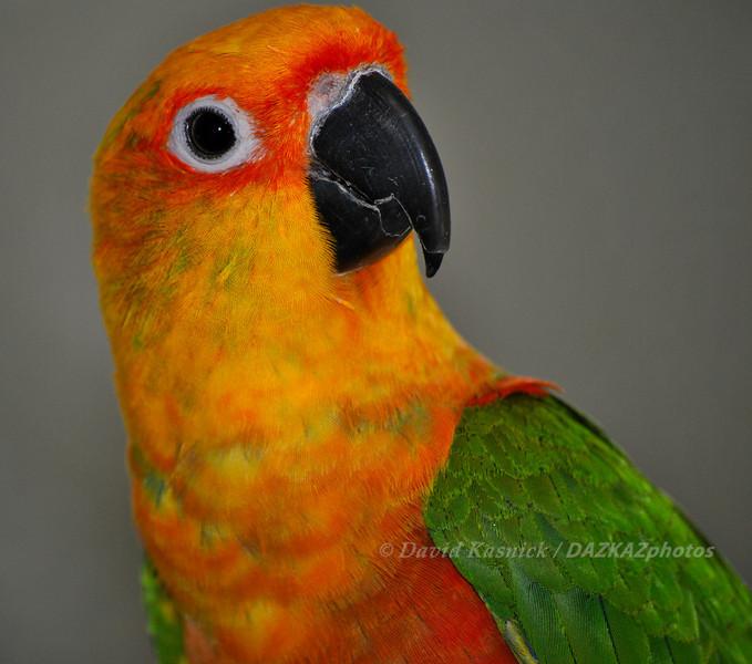 Parrot 2