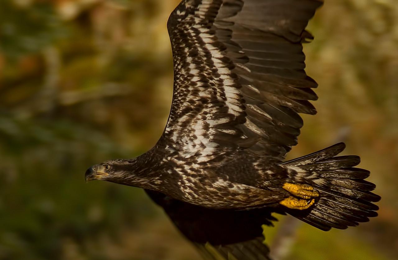 Goldstream Park, Victoria, British Columbia<br /> Camera: Pentax K-5 / Lens: A*1200/8