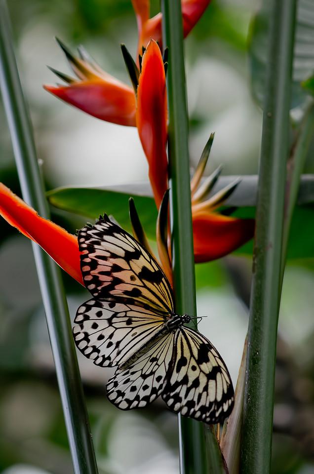 Butterfly Gardens, Victoria, British Columbia<br /> Camera: Pentax K-5 / Lens: A*200/4 macro