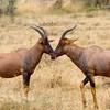 Antelope Symmetry