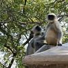 Romeo and Juliet<br /> Daulatabad, India