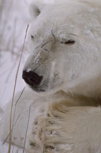 Polar Prayer