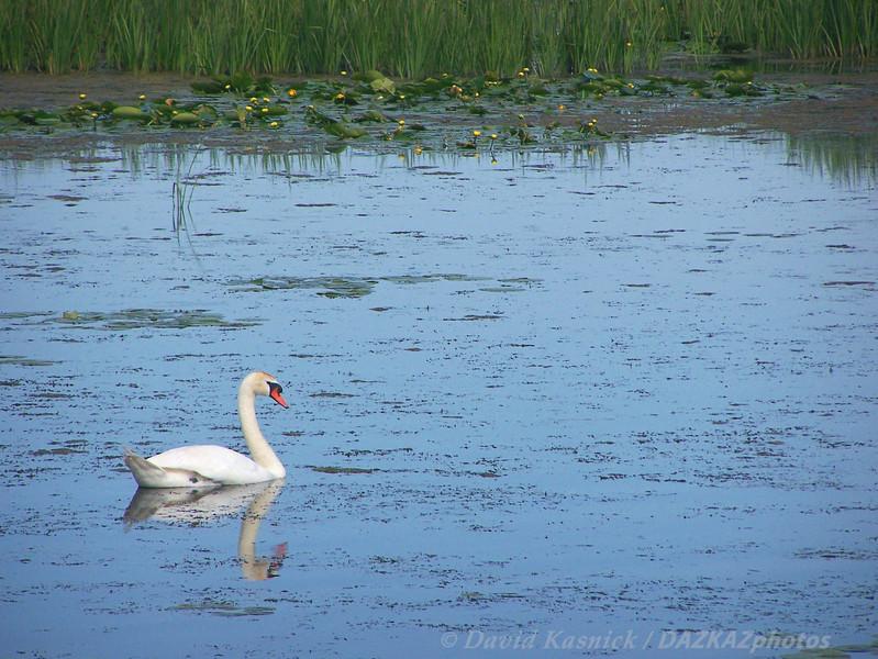 Swan Lake - Pentwater, MI