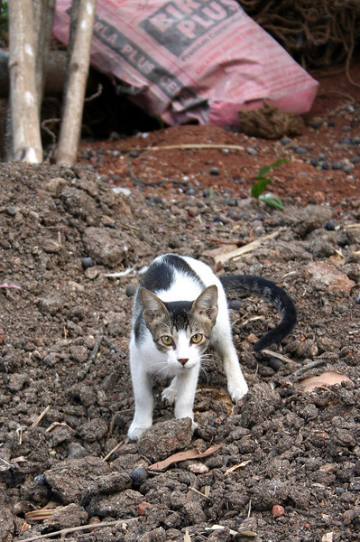 Stray cat<br /> Mumbai, India