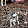 Stray cat<br /> Mumbai, India