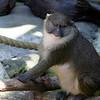 San Diego Zoo, June '09