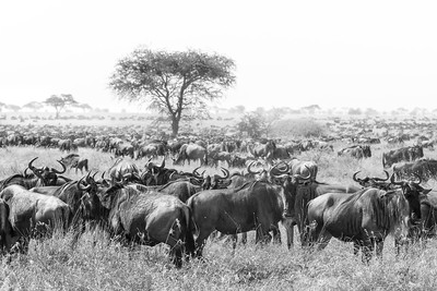 Great Migration I