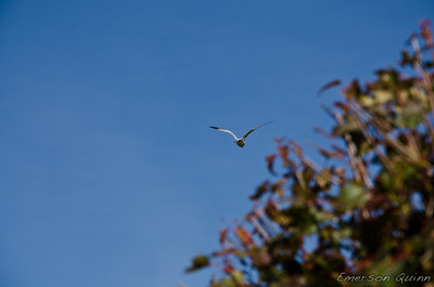 Lone seagull flies away