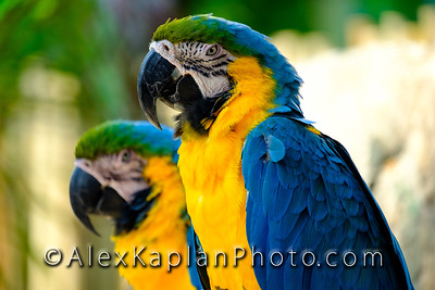 Palm Beach Macaw Parrots