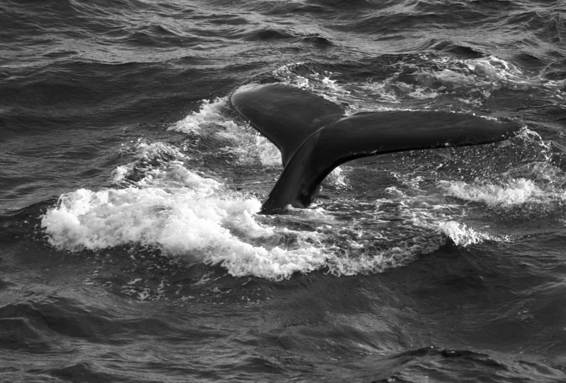 Whales073 - Version 2