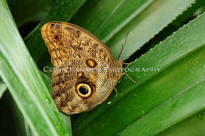 Butterfly of Mainau