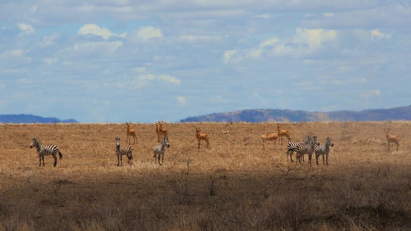 The Kill<br /> Serengeti Tanzania