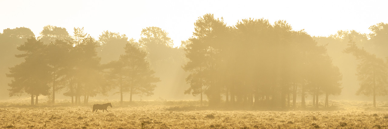 New Forest at Sunrise