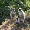 Small talk<br /> Daulatabad, India