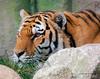 Indianapolis Zoo - MLD