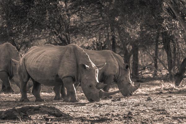 Multi Rhino BW