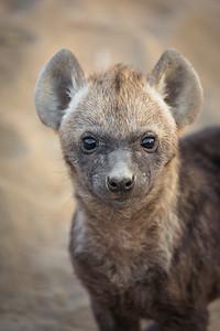 Hyena Pup Eyes
