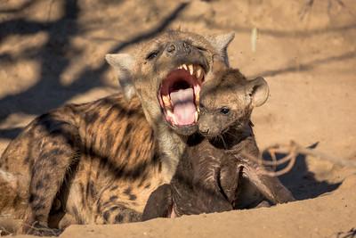 That's Enough Junior, Hyena