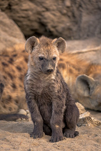 Hyena Pup Pose 1