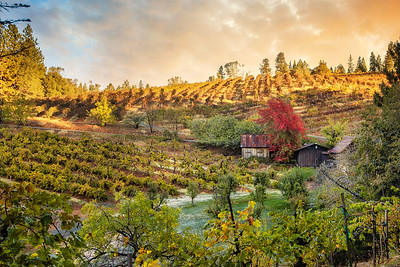 Boeger Winery, El Dorado County