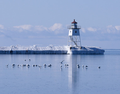 Herring Gulls Return To Grand Marais 1