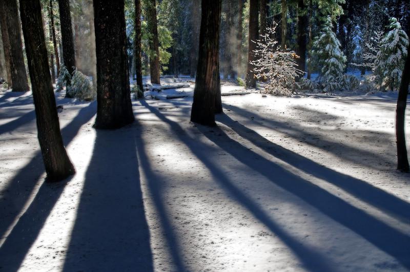 Owl Moon Shadows