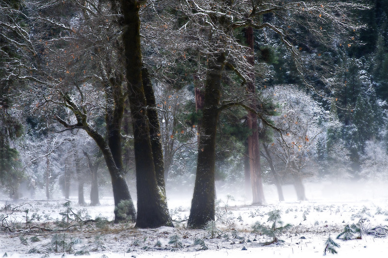 Ice Forest 5