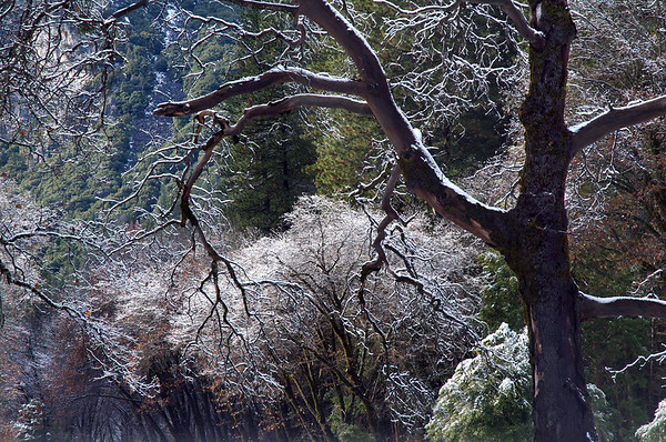 Ice Forest 2