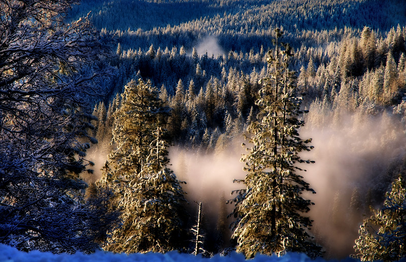 Frosty Forest*