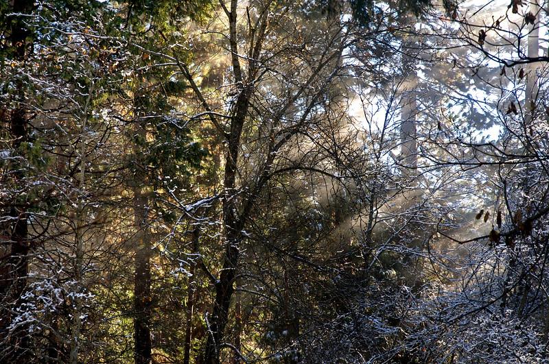 December Sun Rays