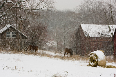 Horses Out In The Storm