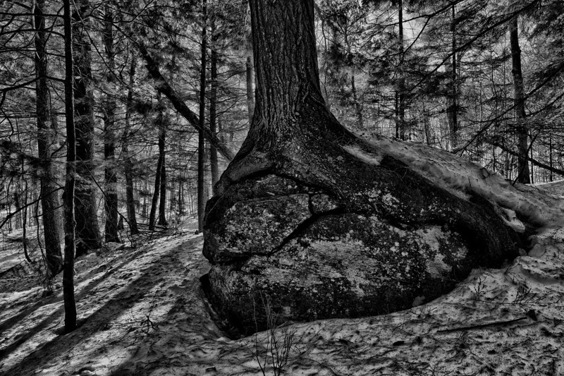 Grasping - Stowe, VT