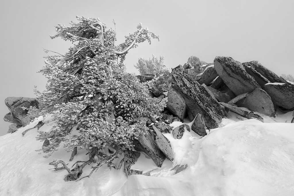 Tree and Rocks in the Snow