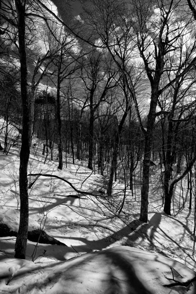 Hillside Shadows - Stowe, VT