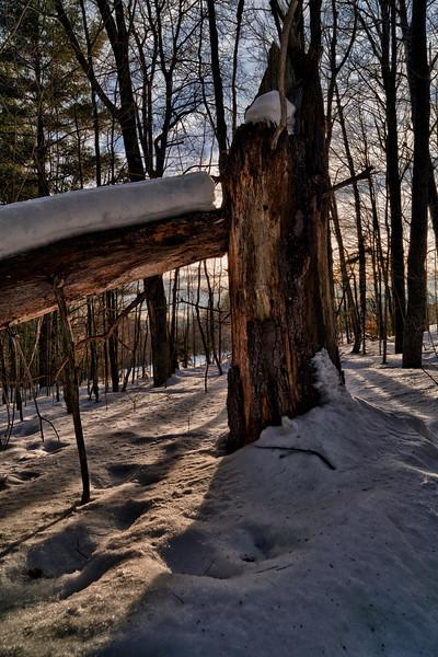 Broken Tree - Stowe, VT