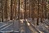 Through the trees - Waterbury, VT