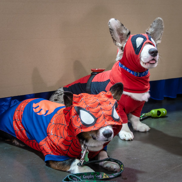 These super hero pups are ready for action at WonderCon 2019