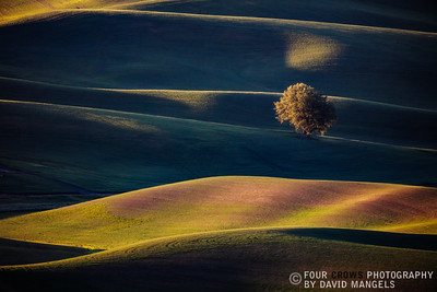 """Palouse Dawn"""