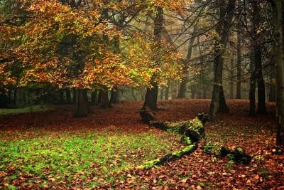 Groenendaal - Autumn 2