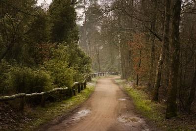 Twente winterscape