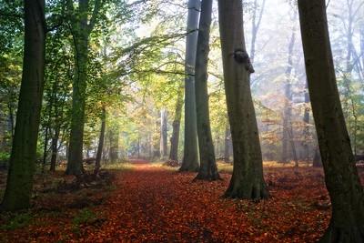 Autumn Groenendaal's Path