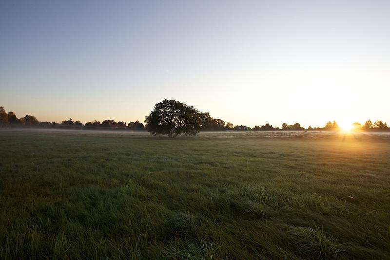 A Good Morning, Jesteburg