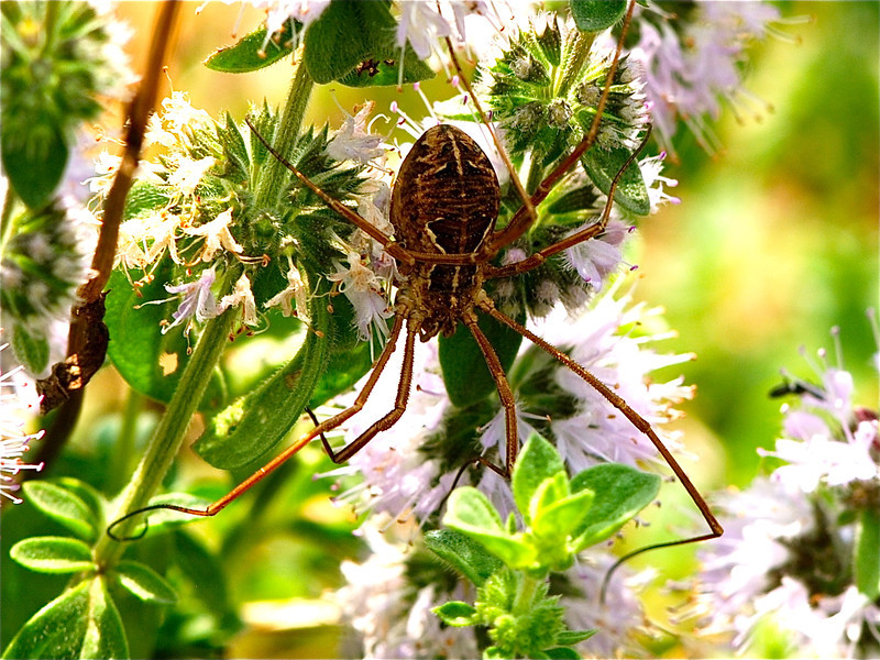 Unidentified Spider, Camargue South of France 2009 ak
