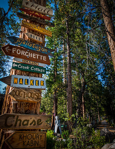 Sign tree in Idyllwild California.