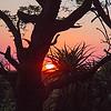 Sunset in Kruger Park, SA